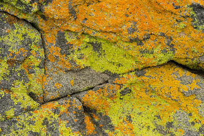 Rock-and-Lichen Pattern #2