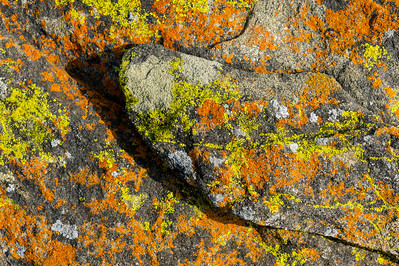 Rock-and-Lichen Pattern #3