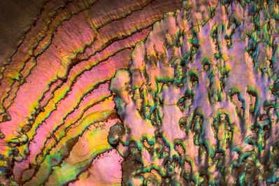Abalone Shell Design -- Macro 1