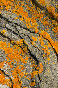 Rock-and-Lichen Pattern #4