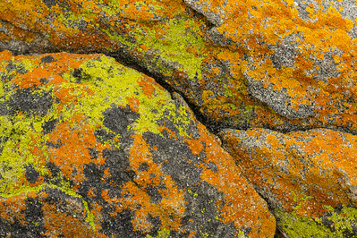 Rock-and-Lichen Pattern #1