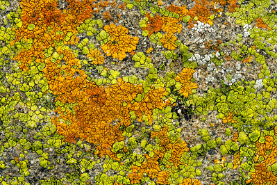 Lichen_Abstract_Coast_1_KKD7109