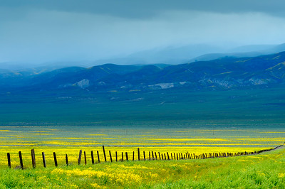 Flowers_Fence_StormClouds_1_KKD9558