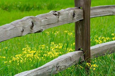 Springtime Countryscape