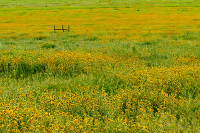 Carrizo_Flowers_&_Fence_KKD9446