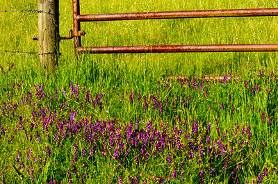 Wildflowers_Country_Gate_KKD9651