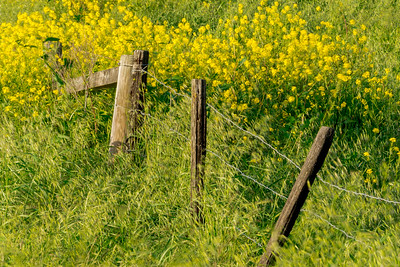 Fence_&_Flowers_1_DAK3723