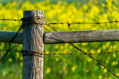 Fence_Yellow_f5 6_KKD5155