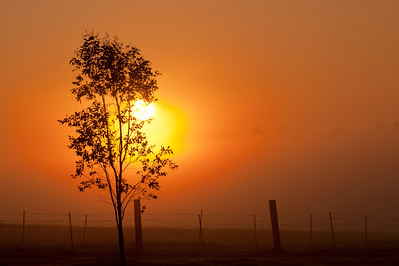 Foggy Country Sunrise