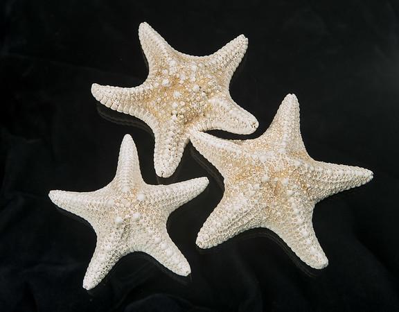 SL871 MUD STAR WHITE