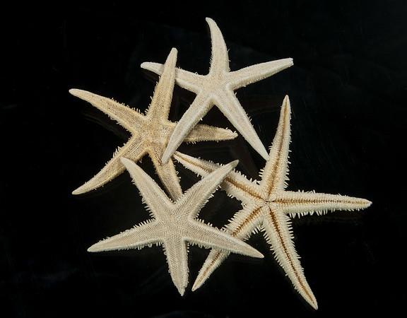 """SL866WH WHITE ORIENTAL STAR 3"""""""