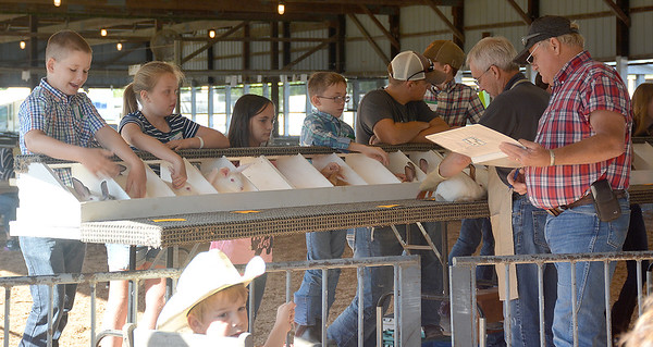 4-H rabbit show entrants wait for their rabbits to be judged Wednesday morning during the rabbit show at the Effingham County Fairgrounds in Altamont. Kaitlin Cordes photo