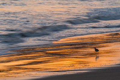 Sandpiper & Beach Reflections