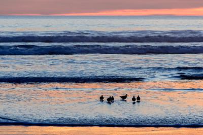 Sandpipers_Sunset_1aa_KKD8674