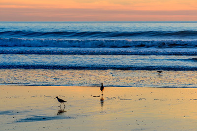Sandpipers_Sunset_2_KKD8639