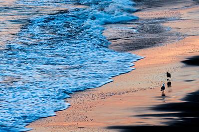 Two_Gulls_2_Sunset_Beach_KKD7206