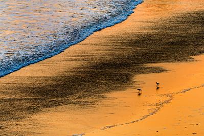 Sandpipers_Sunset_KKD7065