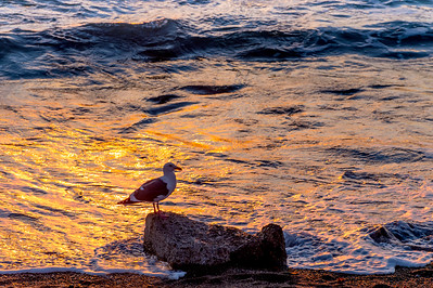 Seagull at Sunset 2