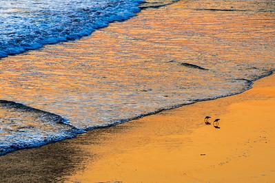 Sandpipers_Sunset_2_KKD7072