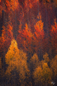 Flames of Autumn (2018)