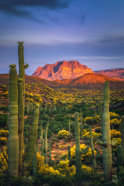 Sonoran Throne (2019)