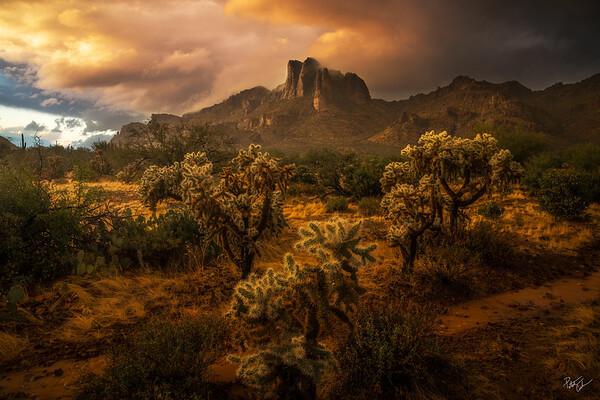 Desert Rains (2019)