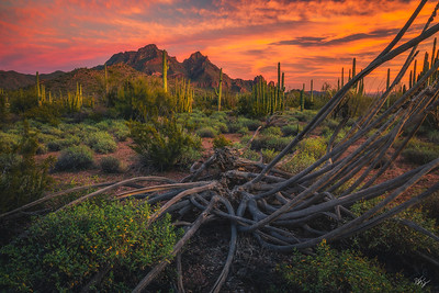 Organ Pipe Sunset (2019)