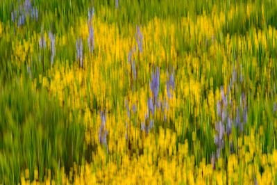Wildflowers_in_Motion_2_KKD9429