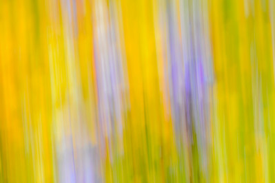 Impressionistic_Wildflowers_Panning_KKD9348