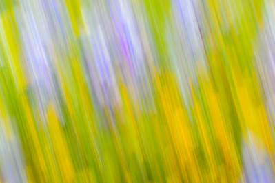 Impressionistic_Wildflowers_2_Panning_KKD9322