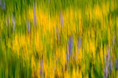 Wildflowers_in_Motion_1_KKD9431