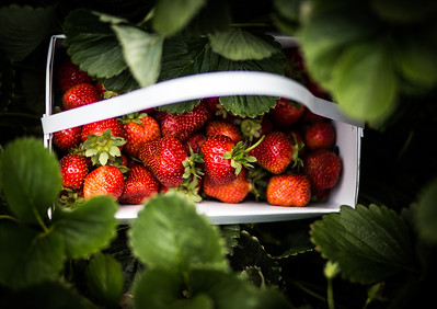 Visio Sonis: Strawberry Fields Forever |  I'm Going to Strawberry Fields