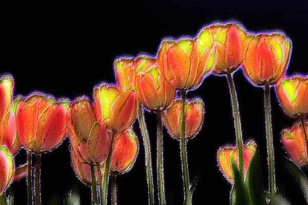 Tulips-Fresco