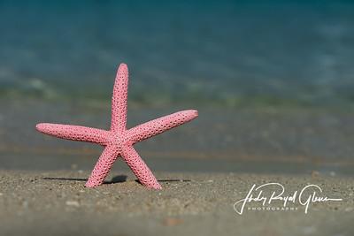 Finger Starfish in Haiti