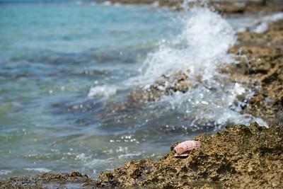 Cozumel's Iron Shore