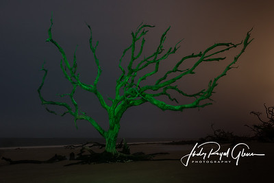 Christmas Tree at Driftwood Beach