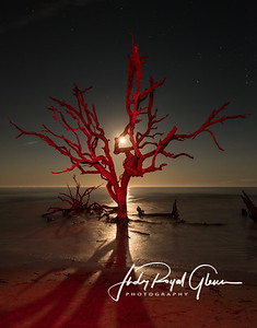 Moonlit Christmas Tree on Driftwood Beach