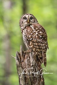 Owl Paparazzi
