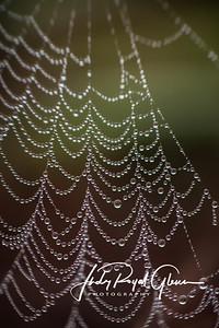 Nature's Bridal Veil