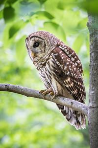 Owl Jam