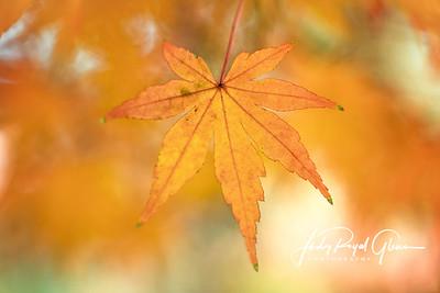 Blazing leaf