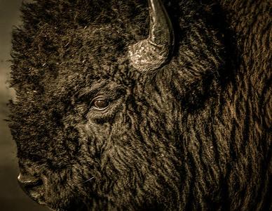 Tetons Wildlife
