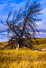 lamar valley tree