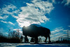Winter snow on the Bronze Bison (Buffalo) outside the Center for the Arts, CFA, on North Campus.<br /> <br /> Photographer: Douglas Levere