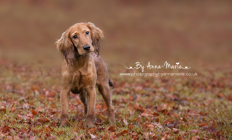 Dog Photography in Yate