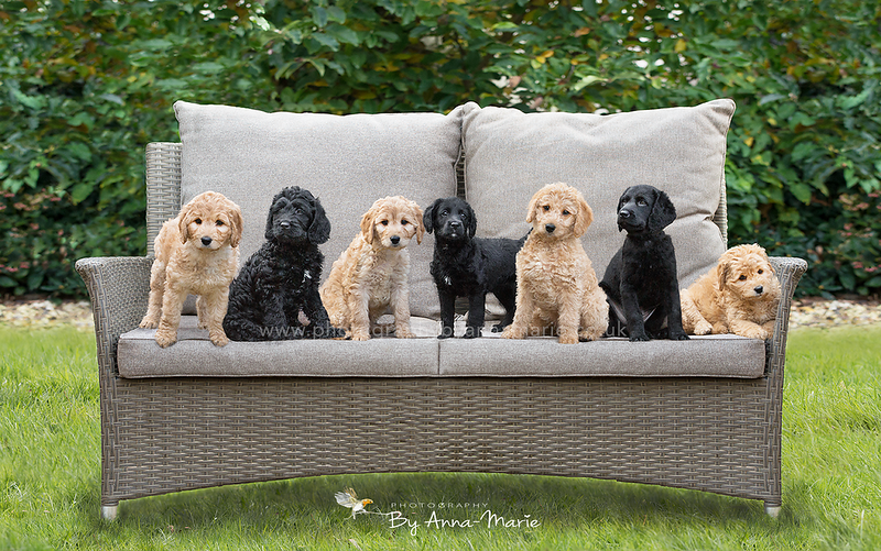 Puppy Photo Shoot