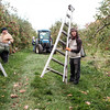 JOED VIERA/STAFF PHOTOGRAPHER-Appleton, NY-Jose Jesus Reyes carries his ladder at a Singer Bittner Orchard in November.