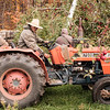JOED VIERA/STAFF PHOTOGRAPHER-Olcott, NY-Mariano Reyes drives a tractor through an apple orchards. Reyes a migrant worker from Mexico, has worked on US farms for over 40 years and for Singer-Bittner Orchards since 1995. The Farms apple picking season comes to a close in the next few days.