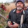 JOED VIERA/STAFF PHOTOGRAPHER-Appleton, NY-Juan Zapin Vargs holds an apple inside his tapped up hands at a Singer Bittner orchard in November.