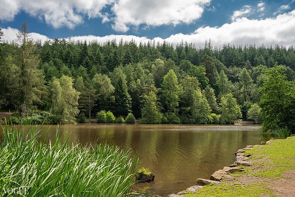 Forest of Dean Photographer